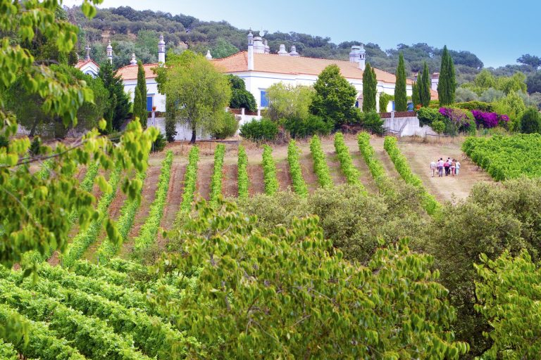 Portugal Cultural Eperience - Alentejo Wine & Gourmet Experience