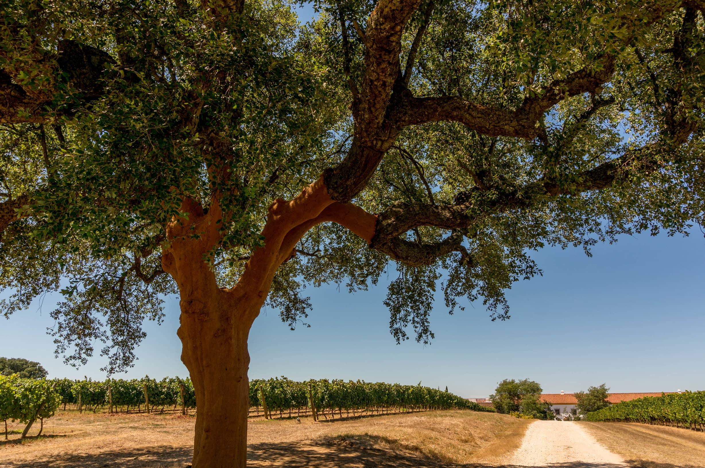 Portugal Cultural Experience - Evora Route Of Bacchus Tour FAQ