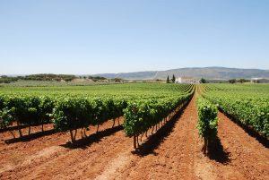 Portugal Cultural Experience - Evora Route Of Bacchus Tour