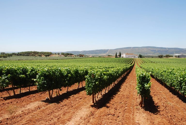 Portugal Cultural Experience - Evora Route Of Bacchus Tour
